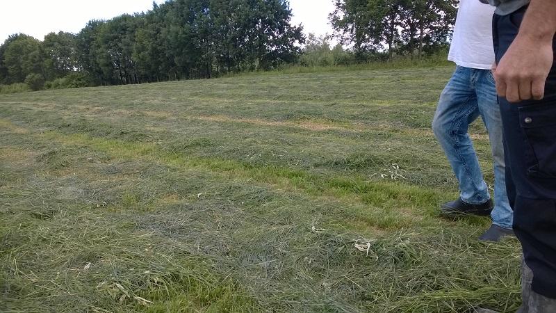 Eten en zaken doen op de melkgeitenhouderij 9 vroedman - Verkoop synthetisch gras ...