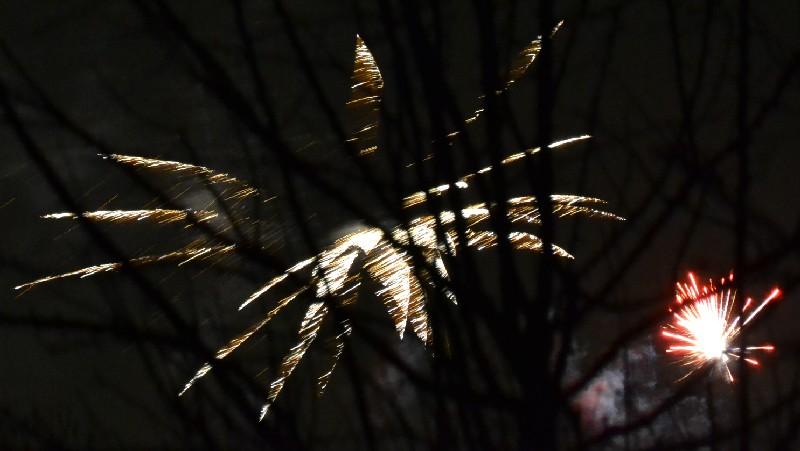 Vuurwerkbloemen tussen de takken