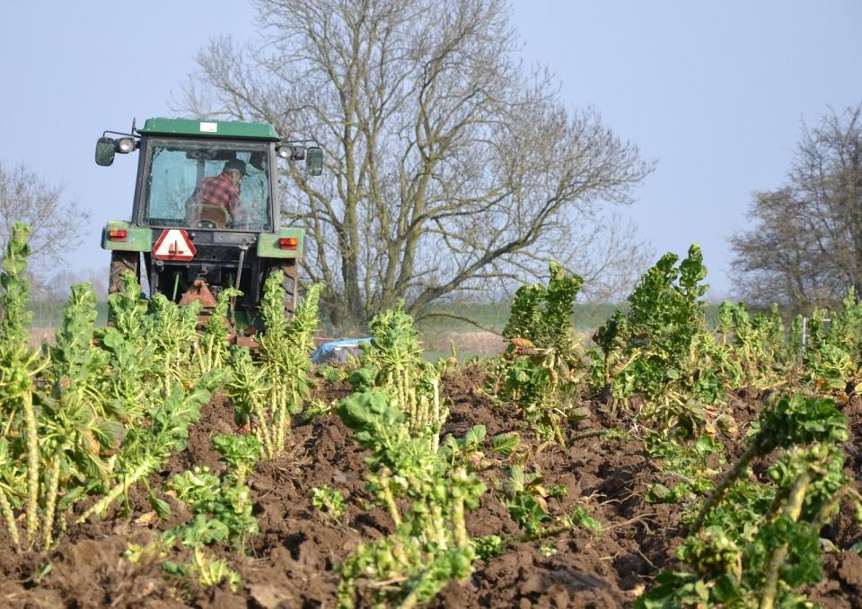 Spruitplanten bewerken 3 - resten worden afgevoerd