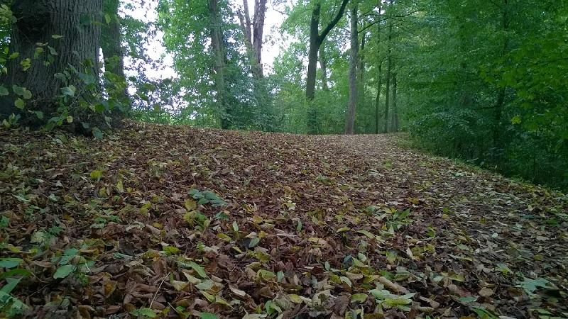 Herfst1 - stadspark Zaltbommel