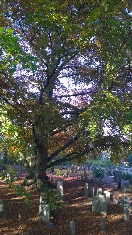 2015-begraafplaats-zaltbommel-1-november